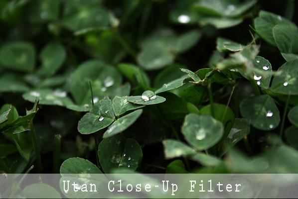 Utan Close-up