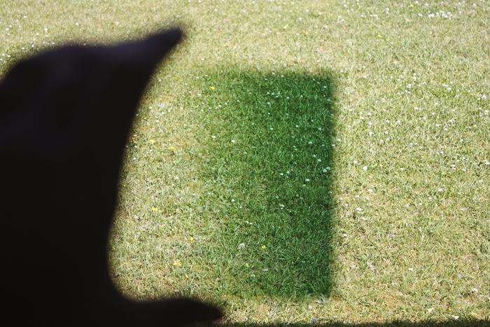 Grönt Filter