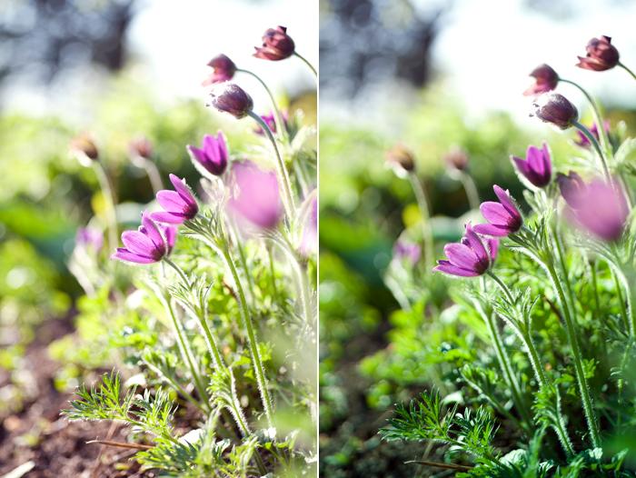 blommor_utan_med_gronfilter