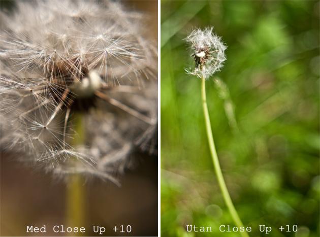 victoria_closeup_4